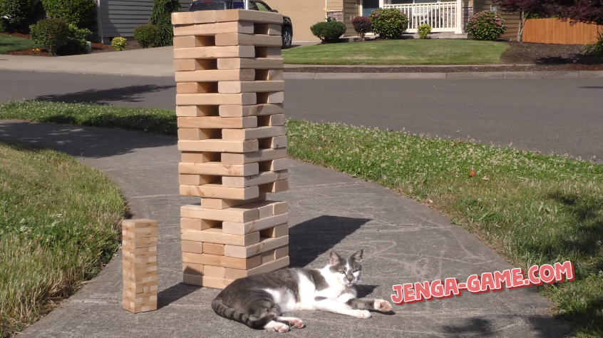 Jenga Tower and a Cat